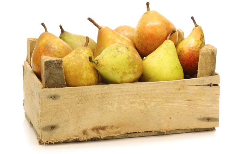 Груши укладывают в ящики или картонные коробки плодоножками вверх
