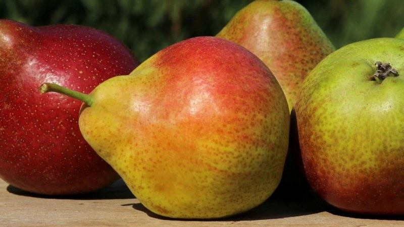 К преимуществам гибрида относят высокую урожайность и прекрасные вкусовые качества плодов