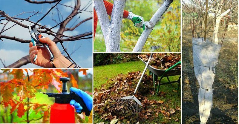 Осенние работы по подготовке плодовых деревьев к зиме включают множество мероприятий