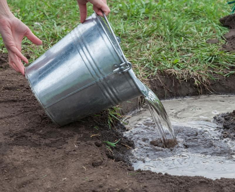 Перед наступлением холодов проводят обильный полив, выливая по 5 ведер воды на 1 м2