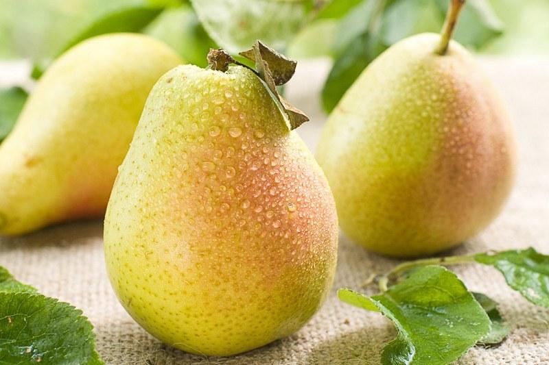 Плоды груши сорта Лада имеют привлекательный внешний вид