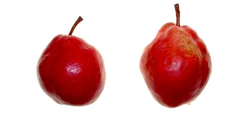 Средний вес плодов груши составляет от 170 до 250 грамм