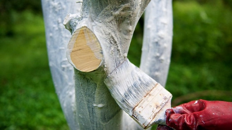 Побелка защитит дерево от болезней и вредителей