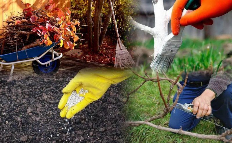 Подготовка фруктового сада к зиме — работа многоплановая