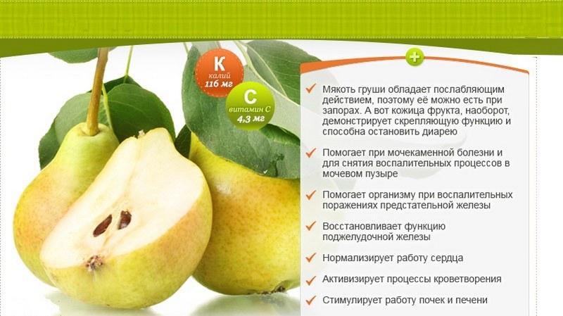 Польза груши для организма человека