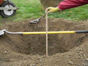 Посадочная яма должна быть стандартных размеров: 70 см в ширину и 1 м в глубину