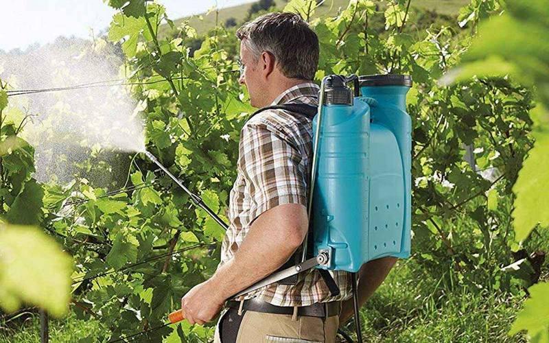 Против вредителей и болезней кусты винограда обрызгивают инсектицидами