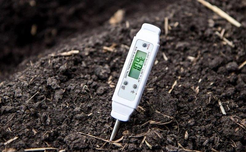 Процесс посадки винограда пройдёт успешно, если температура воздуха не опускается ниже +14 ºС , а почва прогрелась до +10+12 ºС