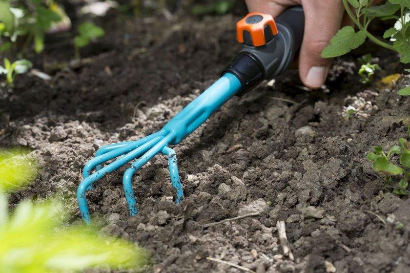 Рыхление почвы обеспечит хороший рост и плодоношение куста