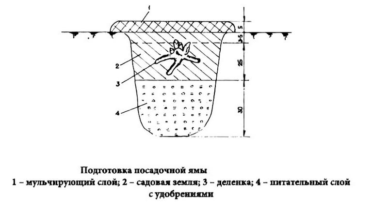 Схема подготовки посадочной ямы