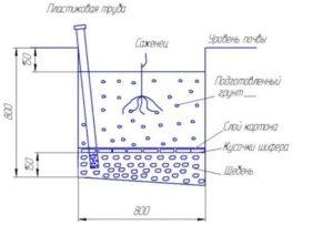 Схема посадочной ямы для осенней или весенней высадки саженца винограда