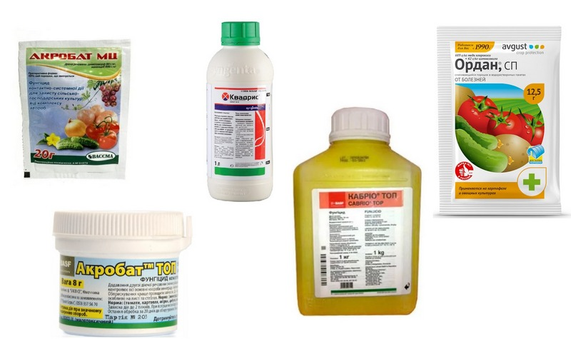 Системные фунгициды для лечения зараженных кустов