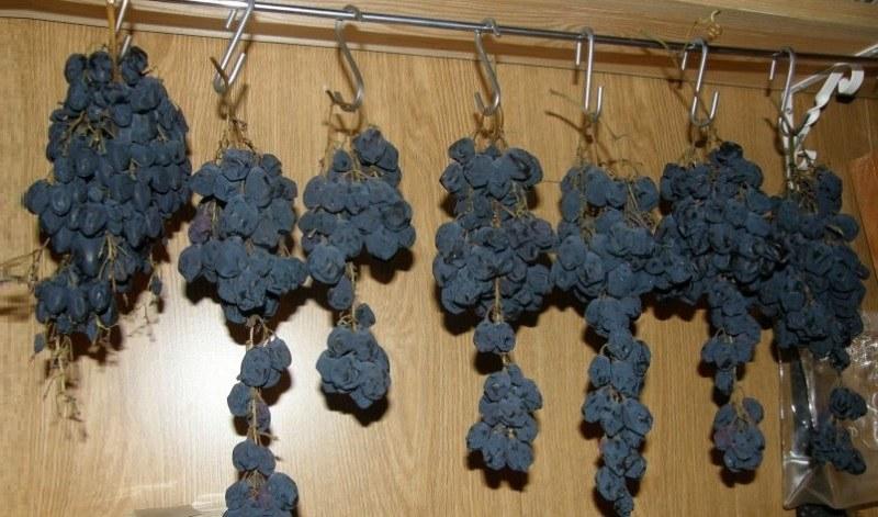 Собранный урожай винограда хорошо сохраняется в гроздьях в подвешенном состоянии