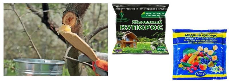 Спилы плодового дерева рекомендуется обработать раствором медного или железного купороса