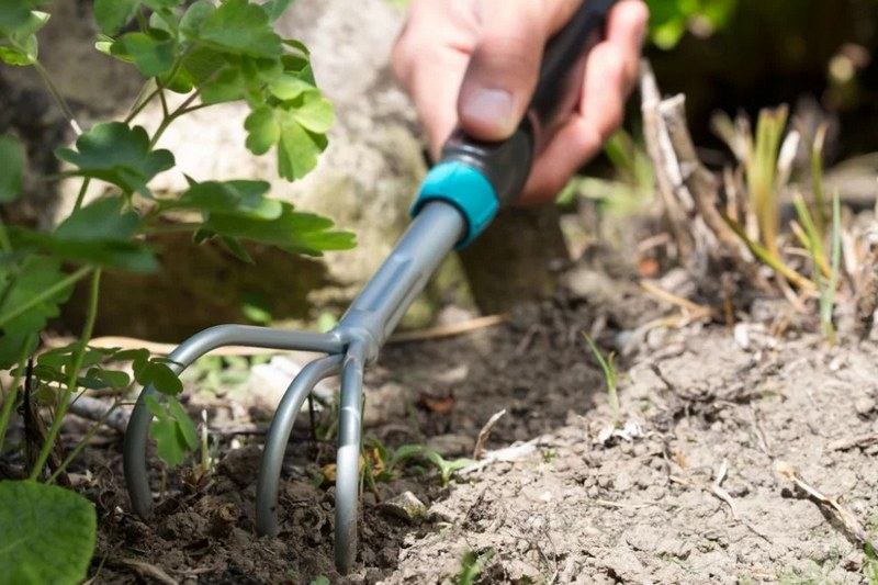 Уход за почвой на винограднике в течение года состоит из прополки и рыхления грунта