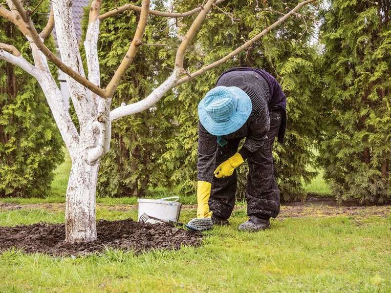 Уход за приствольным кругом предусматривает удаление сорняков