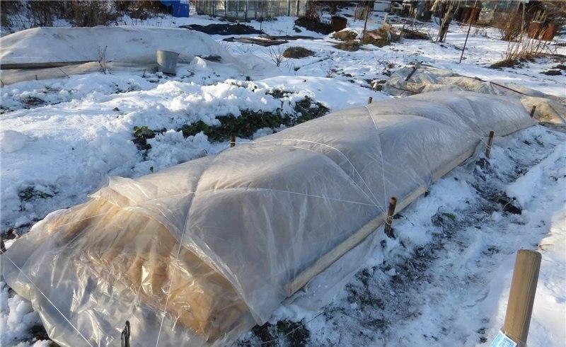 Укрывать виноград на зиму следует в тех регионах, где температура опускается ниже -20 ºС
