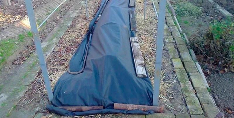 В регионах с холодными зимами для винограда необходимо сооружать укрытия