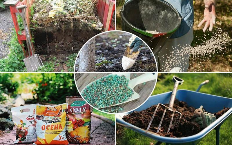 Внесение удобрений - обязательное условие правильного ухода за плодовым деревом