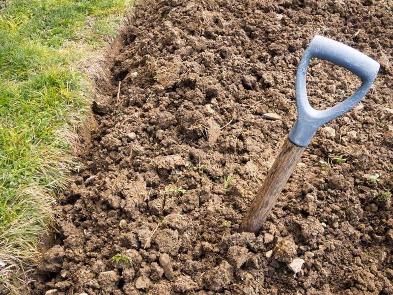 Лучше всего виноградник растет на глинистых почвах
