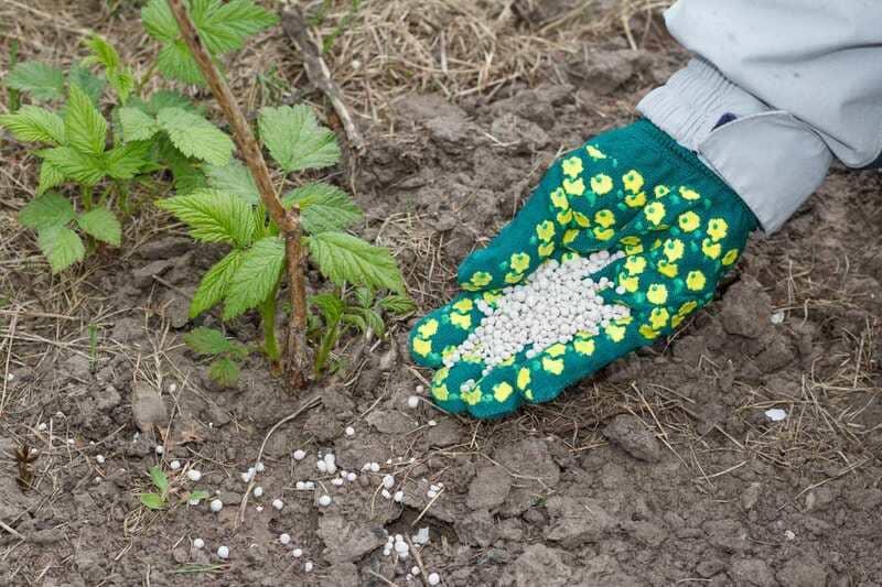 Весной в почву вносят азотные удобрения