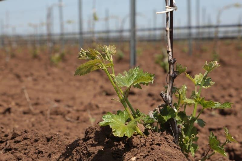 В апреле обычно производят высадку зеленых саженцев