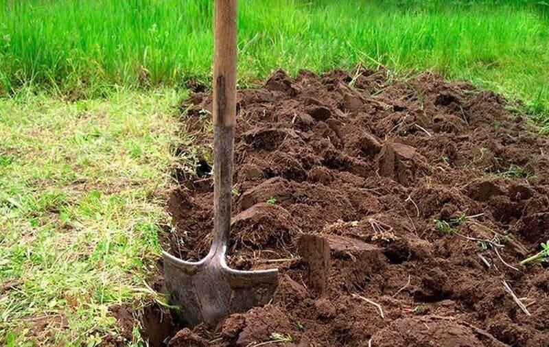 Подготовка почвы начинается с выращивания на ней правильных растений