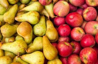 Что полезнее - яблоко или груша