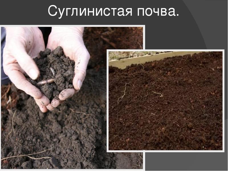 Суглинок представлен крупнозернистым порошком и на 30% состоит из песка