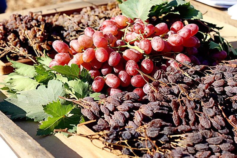 Изюм из винограда Виктор имеет прекрасный вкус
