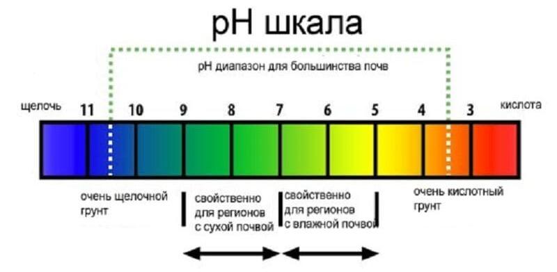 Показатель pH больше 7, свидетельствует о щелочной среде почвы