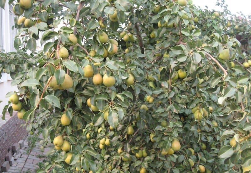Для получения урожая важно правильно выбрать вид культур для своего сада