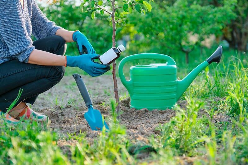 В процессе ухода нужно соблюдать правила поливов и внесения удобрений