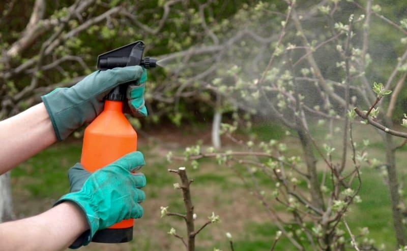 Профилактическая обработка груши проводиться весной и осенью