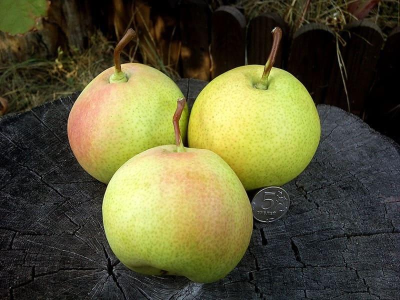 Вкус спелых плодов – кисловато-сладкий, их оценка – 4,5 балла из 5