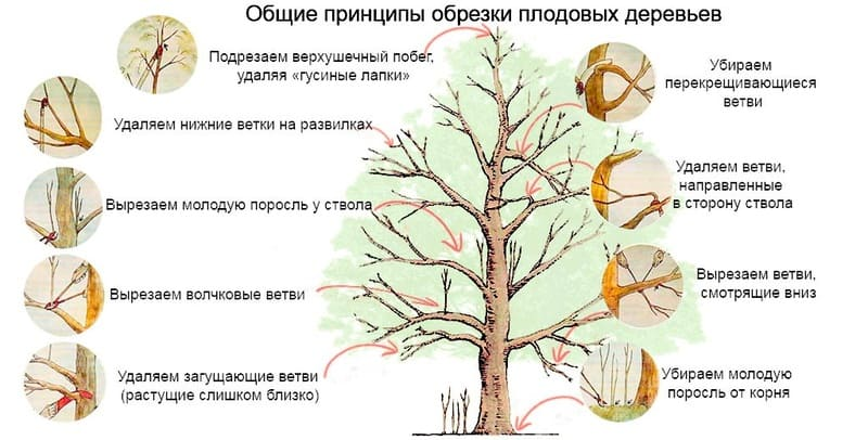 Процедура кажется простой, однако ошибки приводят дерево к стрессу