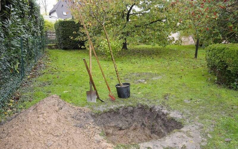 Для посадки груши выкапывают яму на глубину 70-80 см и такого же диаметра