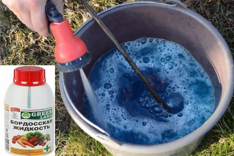 Для профилактики монилиоза деревья опрыскивают раствором бордосской жидкости (2,5 %)