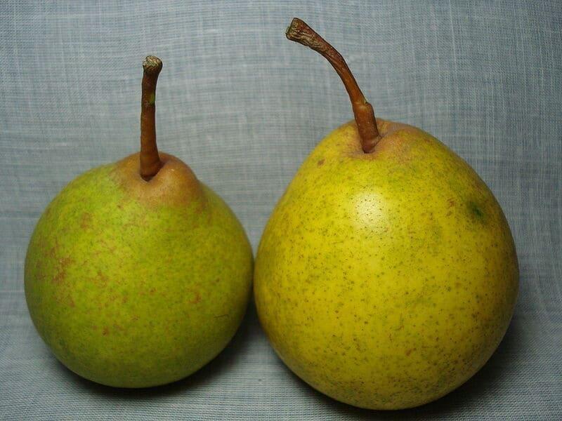 Плоды по массе достигают 200 г. Мякоть сочная и сладкая