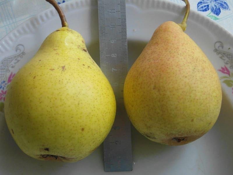 Размер плодов средний, масса входит в пределы от 120 до 180 г