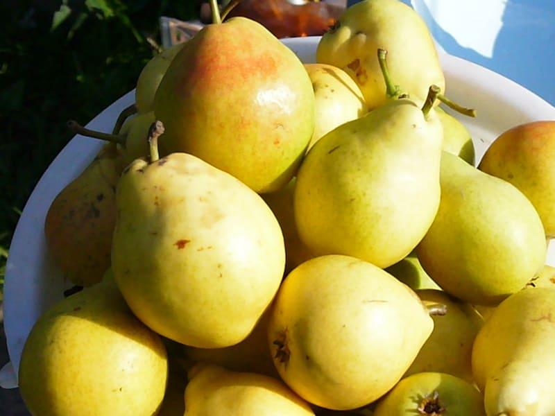 Урожай подходит для употребления в свежем виде или для консервации
