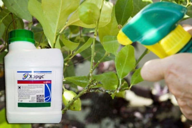 Если вредителей слишком много, то лучше применять специальные инсектициды