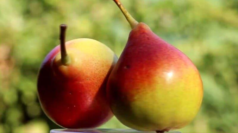 Спелые фрукты – средних размеров, массой около 120 г