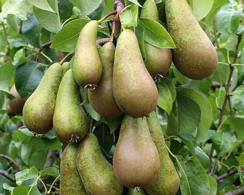 Людям, у которых есть проблемы с почками, нужно с осторожностью включать в пищу этот фрукт