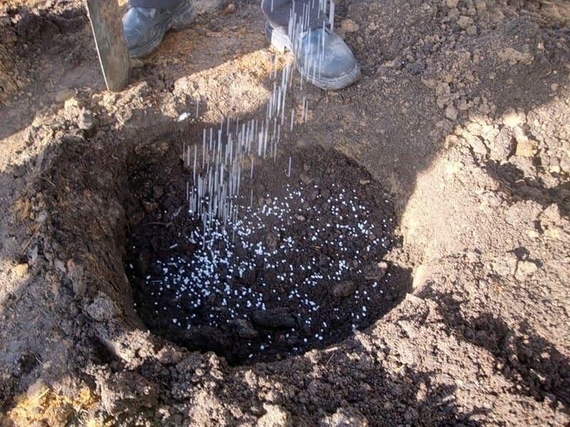 Идеальный вариант для саженцев – это черноземные, суглинистые, супесчаные почвы