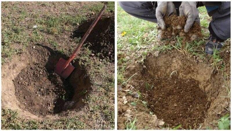 На тяжелых почвах дно ямы покрывают дренажным слоем высотой 15-20 см