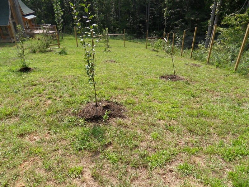 Расстояние между отдельными деревьями в саду зависит от высоты и типа кроны соседей