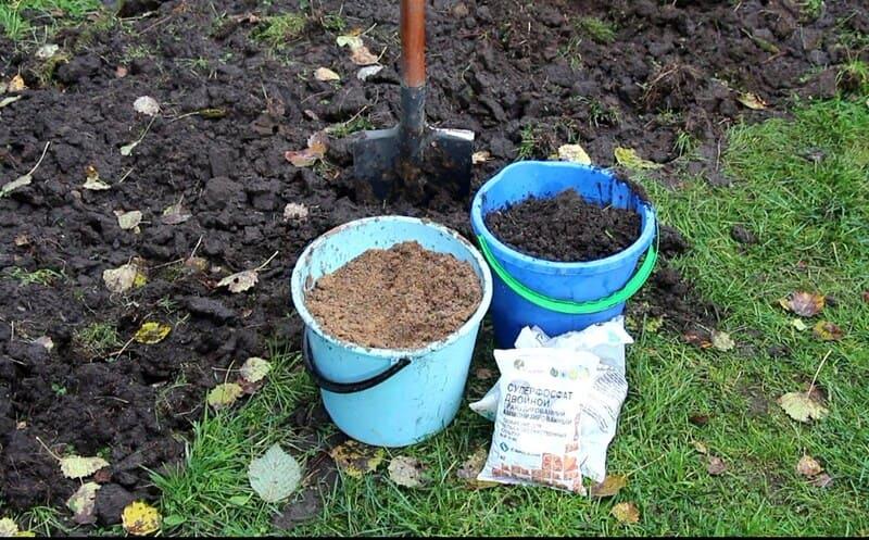 Если грунт неплодородный, то его подготавливают за несколько недель до посадки