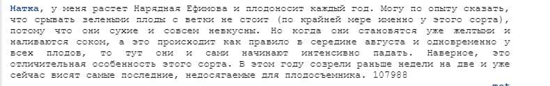 Сорт груши Нарядная Ефимова - обзор и характеристики